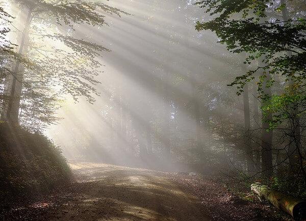 森の道の画像