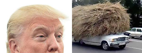 トランプ大統領&干草