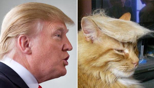 トランプ大統領&猫