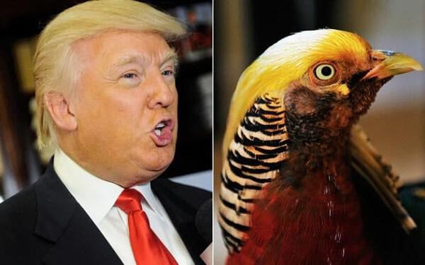 トランプ大統領&黄金キンケイ