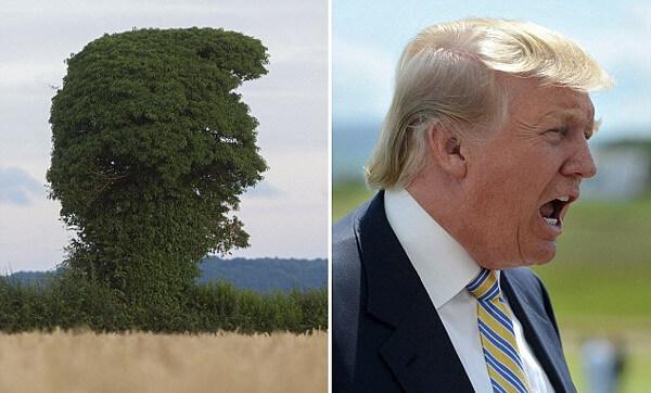 トランプ大統領&樹木