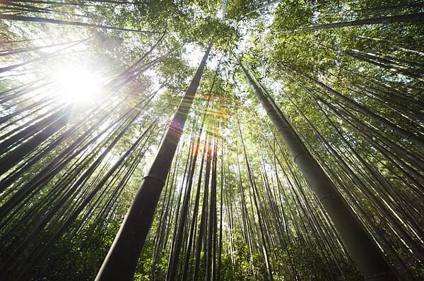 神秘的な森林の画像