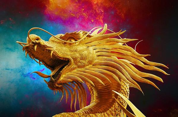 黄金竜の画像