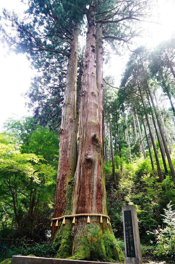 御神木の写真