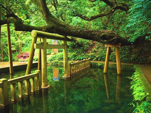 鹿島神宮 御手洗池の写真