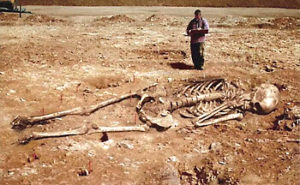 巨人の骨の画像