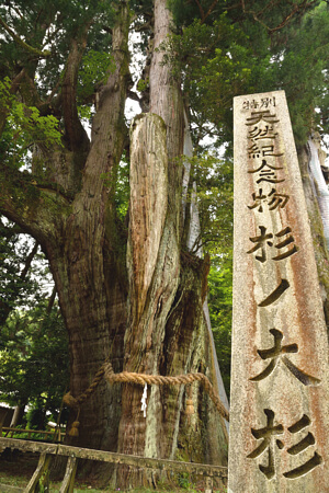 杉の大杉の写真