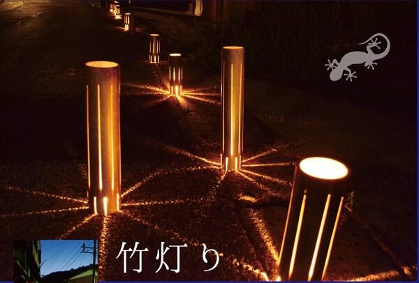 竹が光っている写真