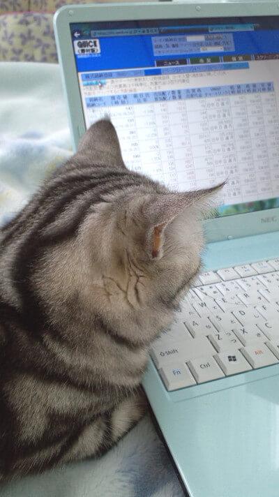 天使猫のんちゃんさんからの投稿写真