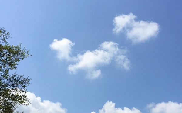 愛犬に似ている雲の写真