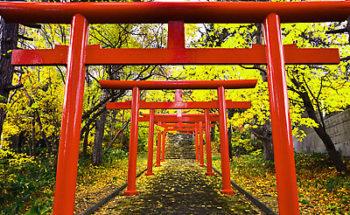 神社の赤い鳥居の写真
