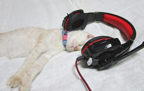 中年おっさんさんの愛猫「凛」