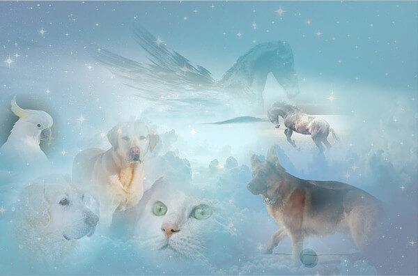 動物のイメージイラスト