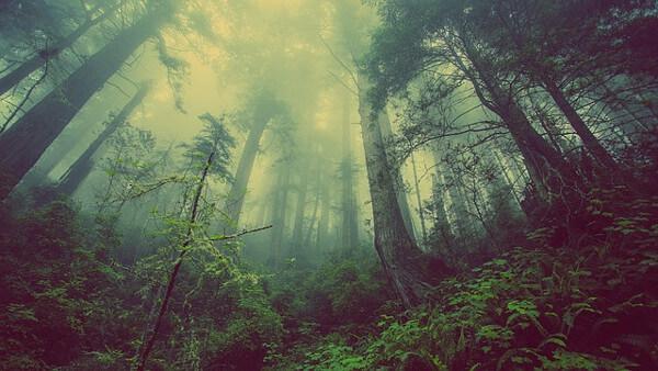 森林のイメージいらすと