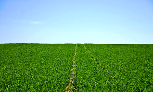 農地の写真