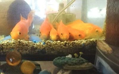 金魚が整列している写真