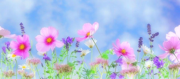 花々の写真