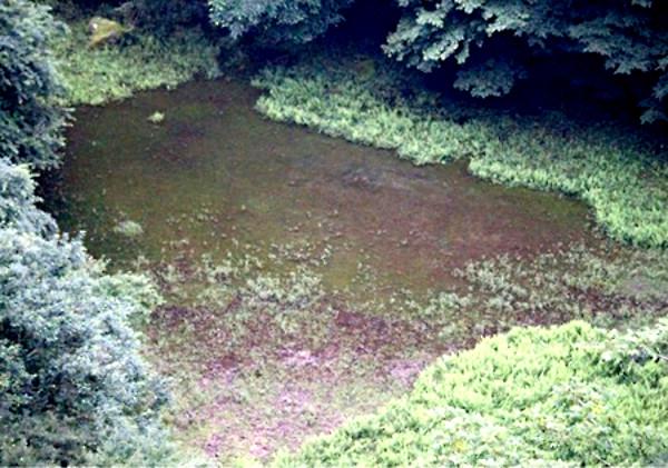 幻の赤池の写真