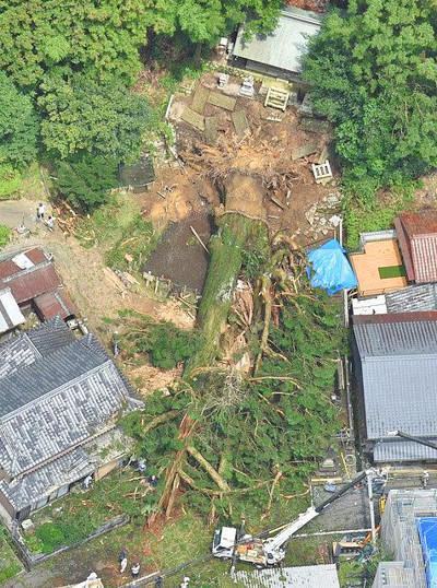 神明神社のご神木の杉が倒れた時のニュース写真