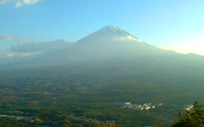 富士の樹海の写真