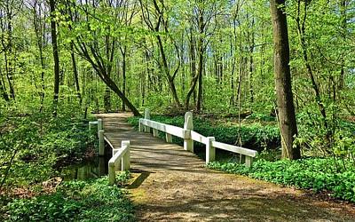 森の中の写真