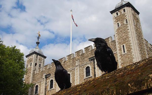 ロンドン塔とカラスの写真