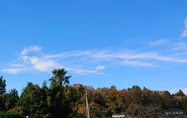 鳳凰のような雲の写真