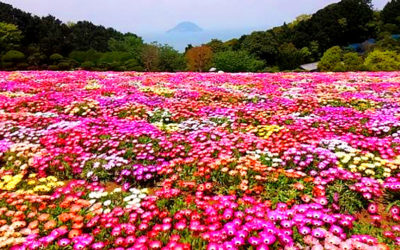 お花畑の写真